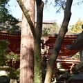 Photos: 冬の奈良市内の写真0041