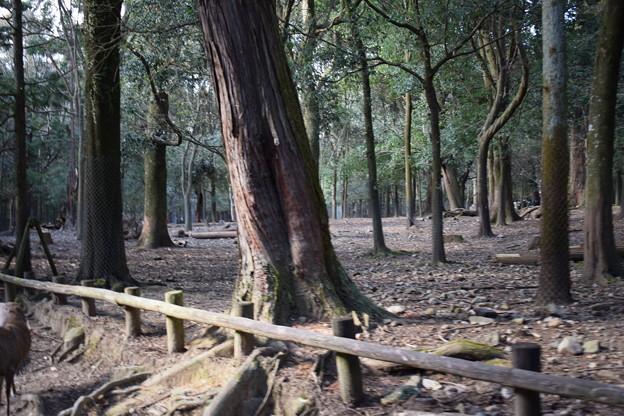 冬の奈良市内の写真0049