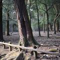 Photos: 冬の奈良市内の写真0049