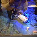 Photos: 海洋堂フィギュアミュージアム黒壁の写真0315