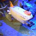 Photos: 海洋堂フィギュアミュージアム黒壁の写真0316
