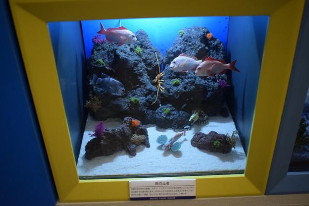 海洋堂フィギュアミュージアム黒壁の写真0345