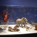 Photos: 海洋堂フィギュアミュージアム黒壁の写真0360