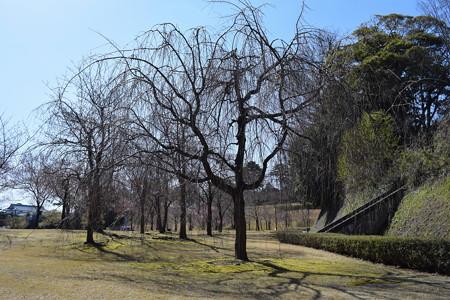 金沢城・兼六園の写真0005