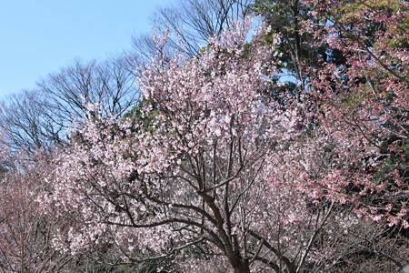 金沢城・兼六園の写真0014