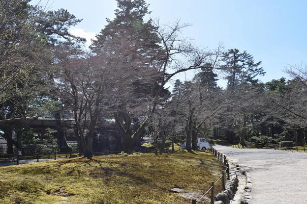 金沢城・兼六園の写真0045
