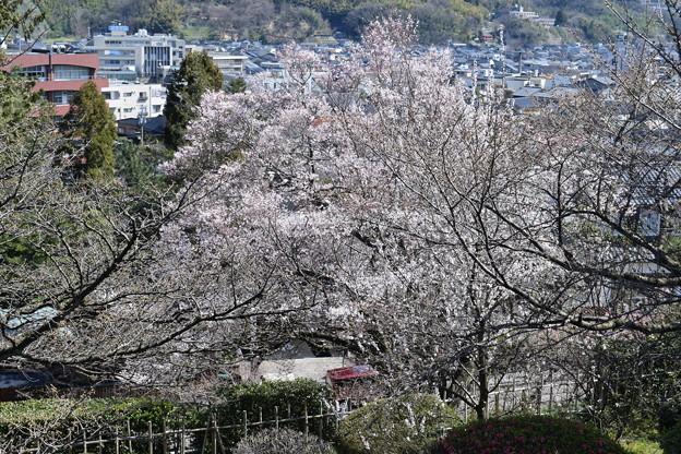 金沢城・兼六園の写真0052