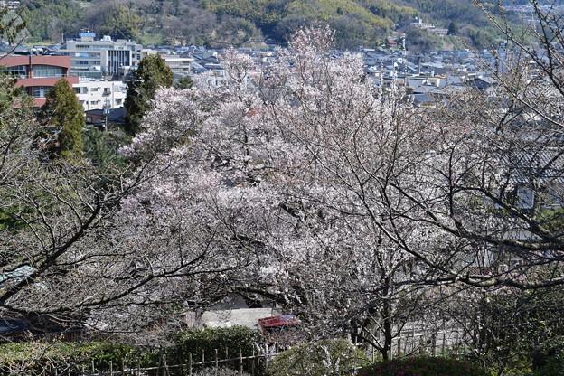 金沢城・兼六園の写真0053