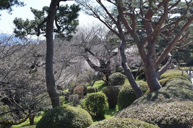 金沢城・兼六園の写真0054