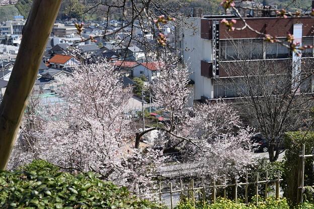 金沢城・兼六園の写真0062
