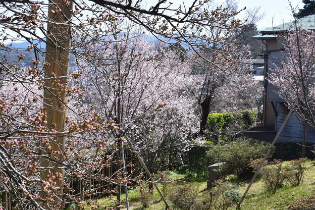 金沢城・兼六園の写真0063