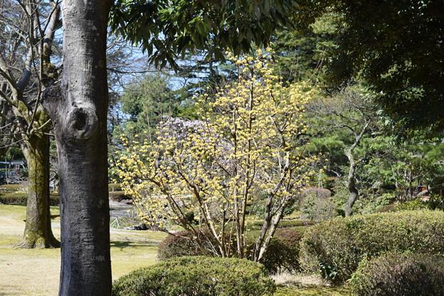 金沢城・兼六園の写真0082