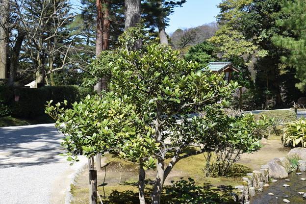 金沢城・兼六園の写真0094
