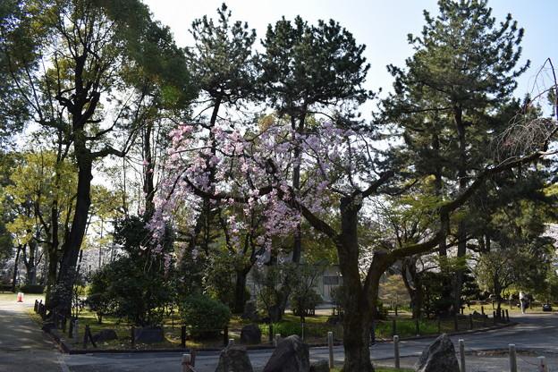名古屋市内の写真0076