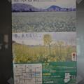 橿原神宮の写真0167