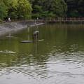 橿原神宮の写真0170