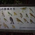 Photos: 石清水八幡宮の写真0002