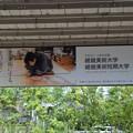Photos: 阪急嵐山駅の写真0009