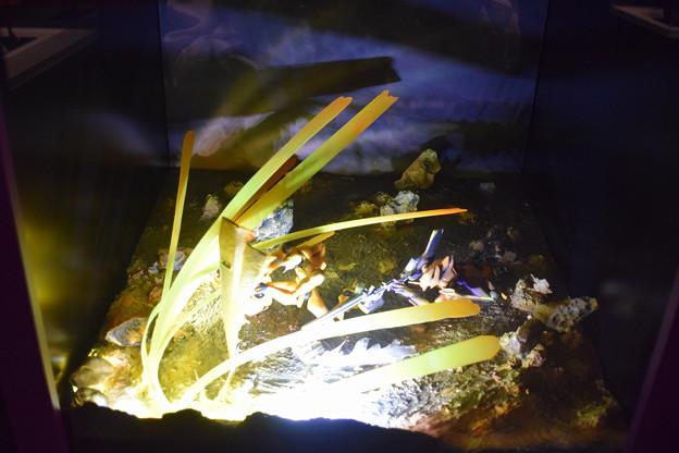 海洋堂フィギュアミュージアム黒壁の写真0420