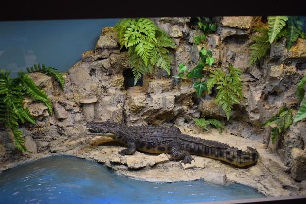 海洋堂フィギュアミュージアム黒壁の写真0641