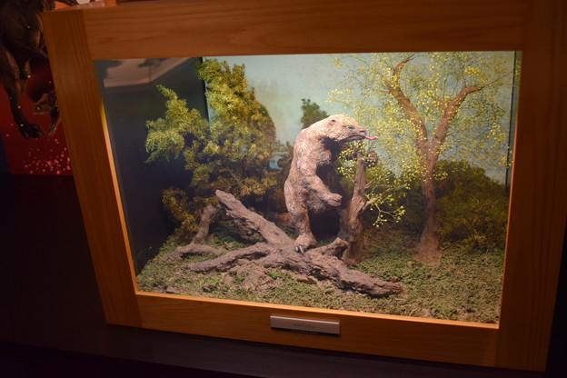海洋堂フィギュアミュージアム黒壁の写真0654