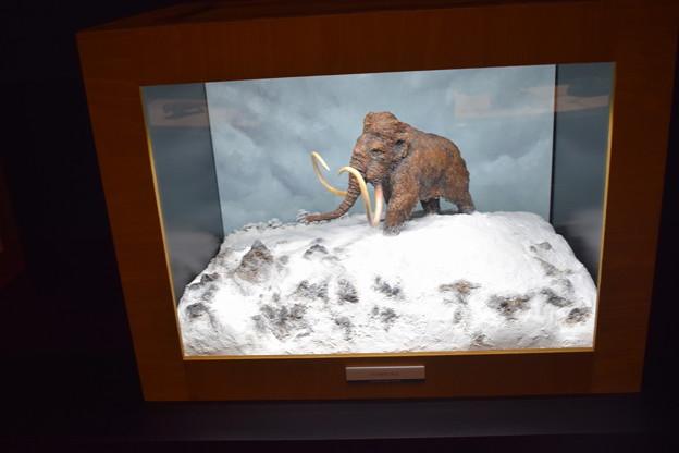 海洋堂フィギュアミュージアム黒壁の写真0653