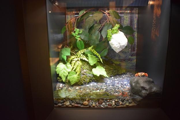 海洋堂フィギュアミュージアム黒壁の写真0659