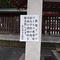 Photos: 敦賀市内の写真0276