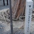 Photos: 敦賀市内の写真0282