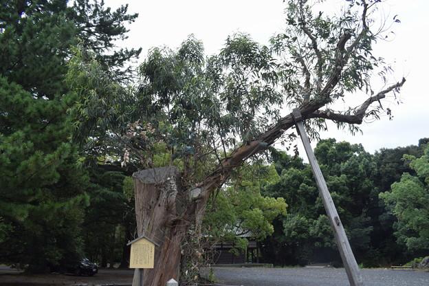 敦賀市内の写真0283