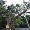 Photos: 敦賀市内の写真0283