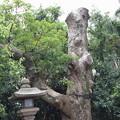 Photos: 敦賀市内の写真0290