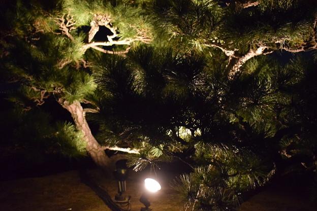 Photos: Himeji Castle Ninja Night2020 0032