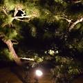 Himeji Castle Ninja Night2020 0032