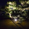 Himeji Castle Ninja Night2020 0033