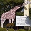 Photos: 姫路市立動物園0002