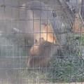 Photos: 姫路市立動物園0003