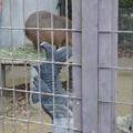 Photos: 姫路市立動物園0005