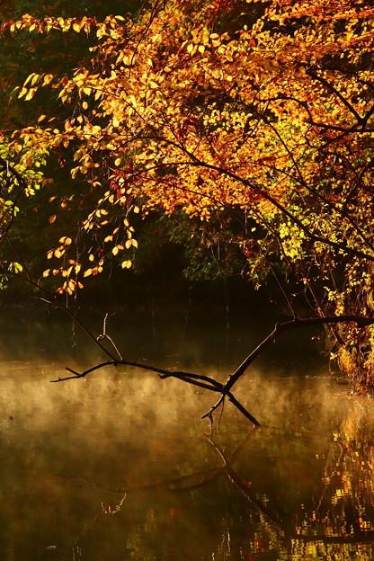 朝靄立つ湖面と紅葉