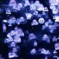 Photos: 水槽にきらめく星々