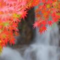 Photos: 燃ゆる葉