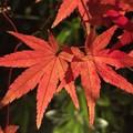 京都にて 2018 秋