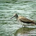 海辺の鳥1