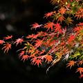 Photos: 錦秋の午後