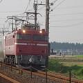 写真: EF81 81+E26系「カシオペア」 (5)