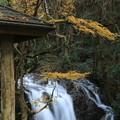 初冬の七ツ滝・六の瀑(1)