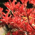 Photos: *紅葉*