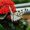 *昆虫館の花と蝶*