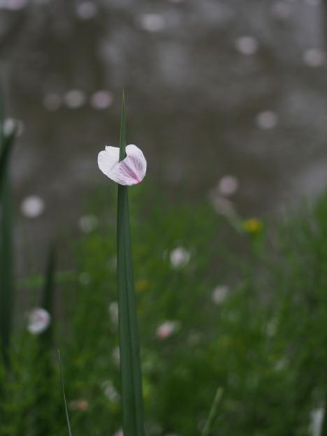 写真: 春嵐のいたずら