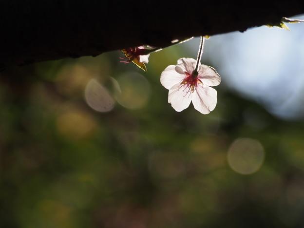 写真: 花を送ろう